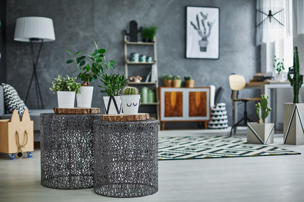 Des plantes pour apporter une touche de bien-être