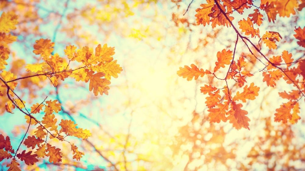Jardin automne 1