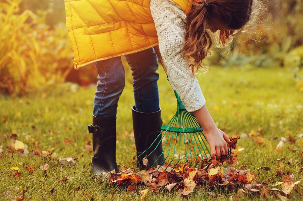 Jardin automne 3
